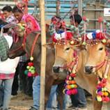 ประเพณีวัวเทียมเกวียน  จังหวัดเพชรบุรี