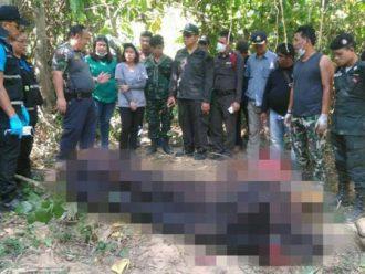พบกระทิงป่า หนักกว่า 1 ตัน ตายในป่าแก่งกระจาน ชี้ สู้กันเอง