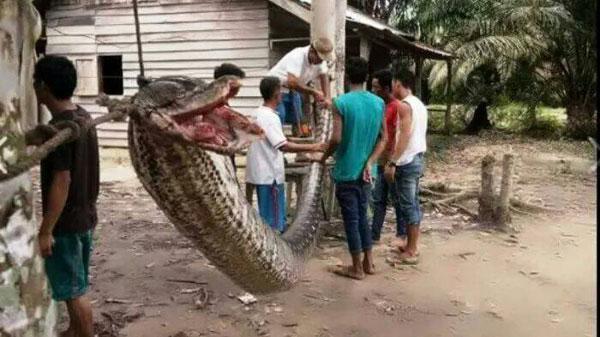 งูหรืออะไรตัวใหญ่มาก???