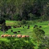 อุทยานแห่งชาติกุยบุรี ความอุดมสมบูรณ์ของผืนป่าตะวันตก
