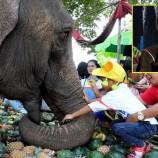 """อนุทิน"""" เปิดงานเลี้ยงอาหารช้างยิ่งใหญ่ ช้าง 160 เชือกพาเหรดเข้าเมืองร่วมงานมหัศจรรย์แสดงช้างสุรินทร์"""