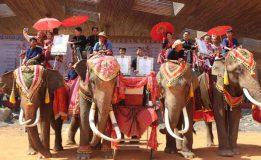 หนึ่งเดียวในโลก! เมืองช้างจัดวิวาห์หวานวันวาเลนไทน์ 60 คู่รักจดทะเบียนสมรสบนหลังช้าง